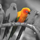 stand-out-color-splash1